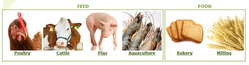 Mycotoxins Pigs