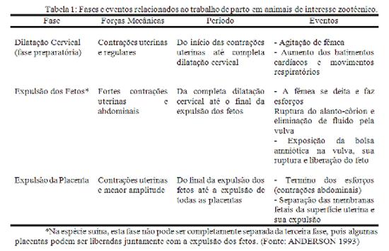 Preparação Matrizes <b>Parto</b> - Engormix 2014