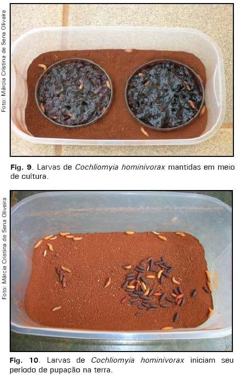 Espécie de vermes em crianças