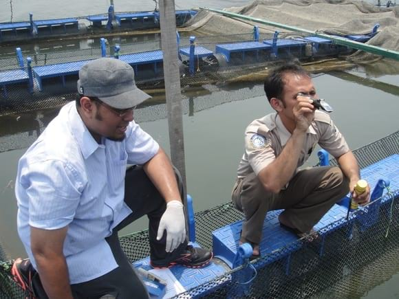 Water quality observation - Clinical issues