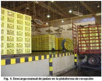 Produccion Y Comercializacion De Pollos De Engorde En El Ecuador