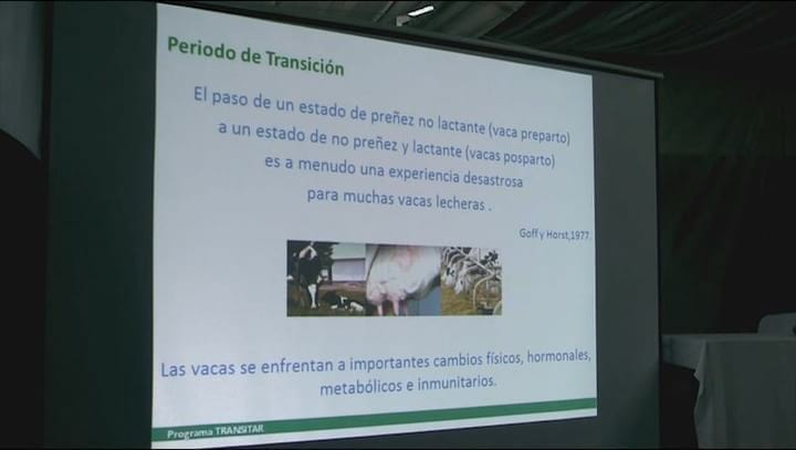 Juan Baeck: Nutrici�n preparto para alta producci�n