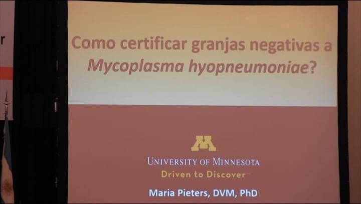 Porcinos: Granjas libres de Mycoplasma hyopneumoniae