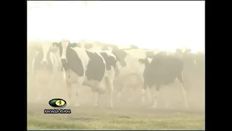 Alimentos balanceados en la producci�n de leche para rodeos de alto desempe�o productivo