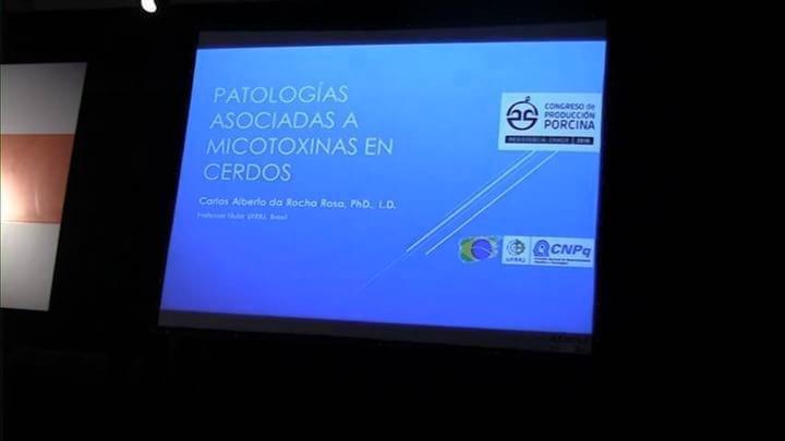 Patologias asociadas a Micotoxinas en cerdos