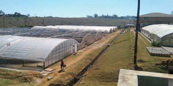 Large-Scale Biofloc Tank Culture of Tilapia in Malawi – a