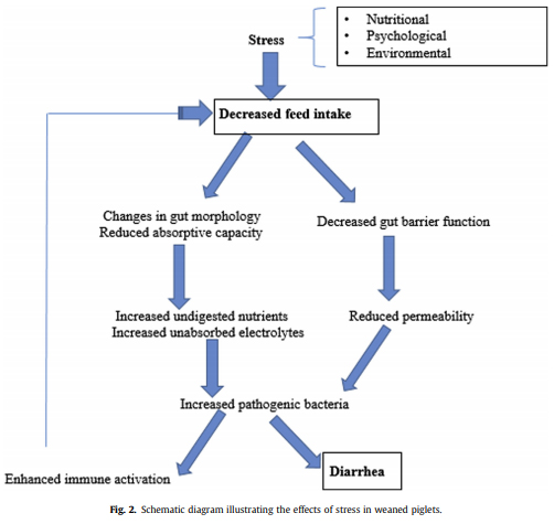 Husbandry practices and gut health outcomes in weaned piglets: A