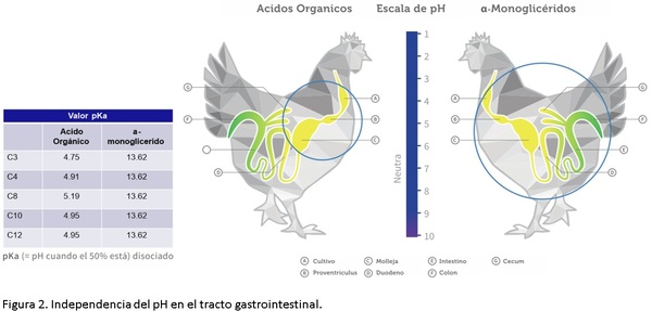 ¿Por qué es importante la salud intestinal en los animales? - Image 4
