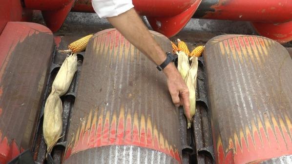 cabezal para Cosecha de maíz