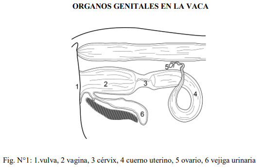 Fisiologia Y Anatomia Del Pollo. Engormix