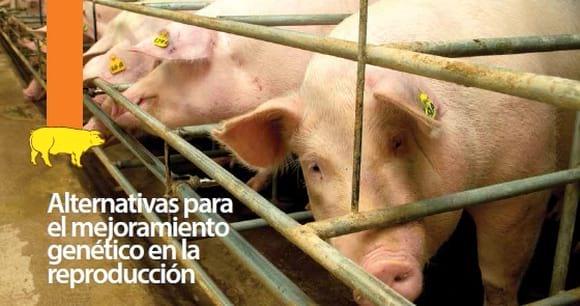 Manejo Porcinos