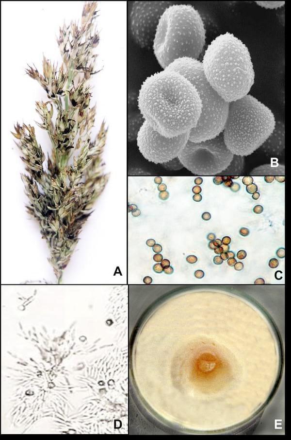 Histopatología y alteraciones morfológicas producidas por ...