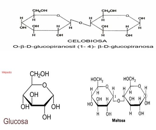 Diferencias Entre El Almidon Y La Celulosa Engormix
