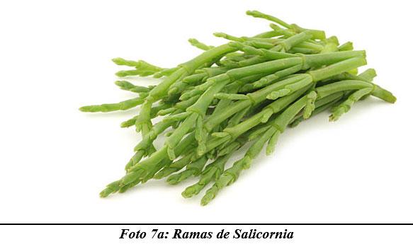 También sirven para hacer cocina gourmet : DIFERENTES TIPOS DE COMIDAS GOURMET CON FORRAJES NATURALES1 - Image 11