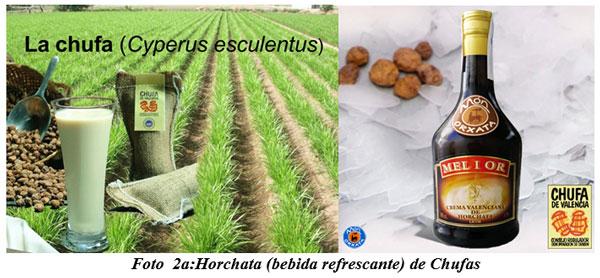 También sirven para hacer cocina gourmet : DIFERENTES TIPOS DE COMIDAS GOURMET CON FORRAJES NATURALES1 - Image 3