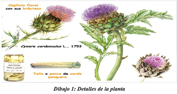 También sirven para hacer cocina gourmet : DIFERENTES TIPOS DE COMIDAS GOURMET CON FORRAJES NATURALES1 - Image 1