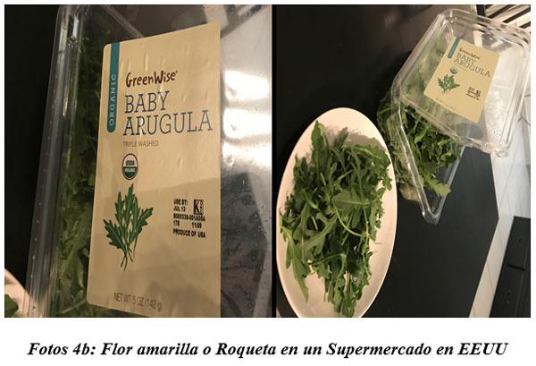 También sirven para hacer cocina gourmet : DIFERENTES TIPOS DE COMIDAS GOURMET CON FORRAJES NATURALES1 - Image 7