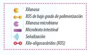 Fibra y microbiota ¿es posible acelerar la fermentación? - Image 2