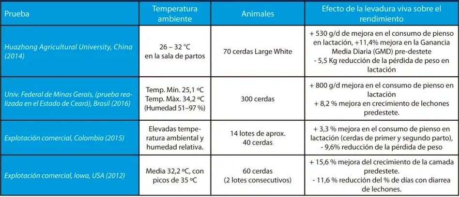Estrés por calor en porcino: cómo mantener los rendimientos productivos de las cerdas - Image 4