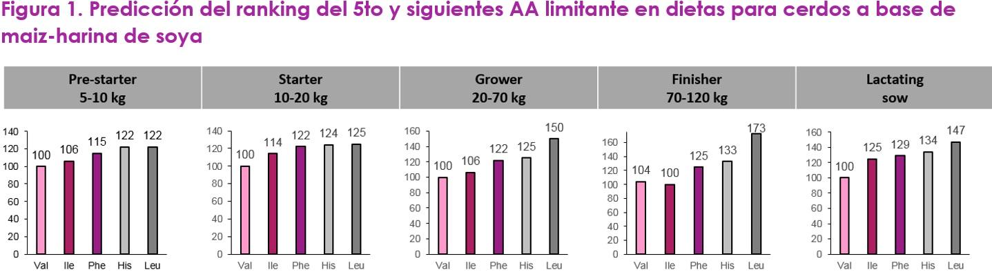 Optimizando la proteína de la dieta con valina como el siguiente aminoácido limitante - Image 1