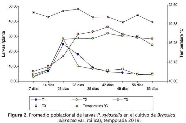 Estrategia de componentes para el manejo integrado de Plutella xylostella L. en brócoli - Image 4
