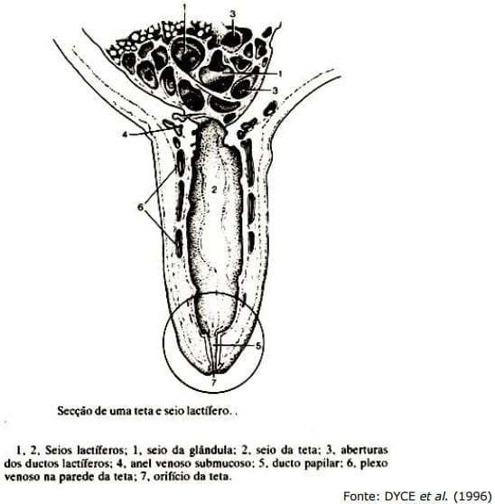 Sistema Mamario - Engormix