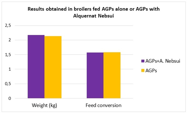 Alquernat Nebsui is a safe bet to improve poultry sector's profitability - Image 3