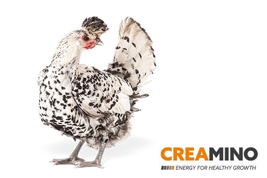 Creamino® obtains US approval for all poultry species - Image 1