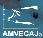XXVI Ciclo de Conferencias AMVECAJ 2020