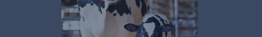 Temas selectos en bovinos productores de Leche