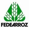 FedeArroz