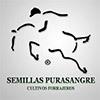 Semillas Purasangre