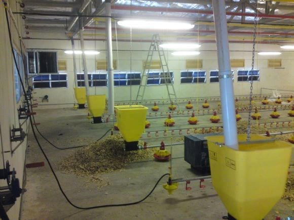 Feeding systems - Poultry equipment