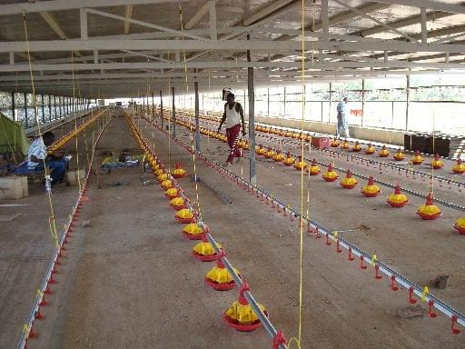 Complete projects - Poultry equipment