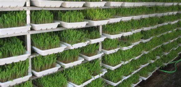 hydroponics fodder - Greenfield
