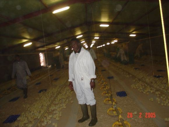 CHICKS PLACEMENT - AL-WATANIA POULTRY SAUDI ARABIA
