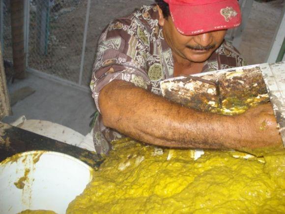 Ensilaje de mango - Mangaza