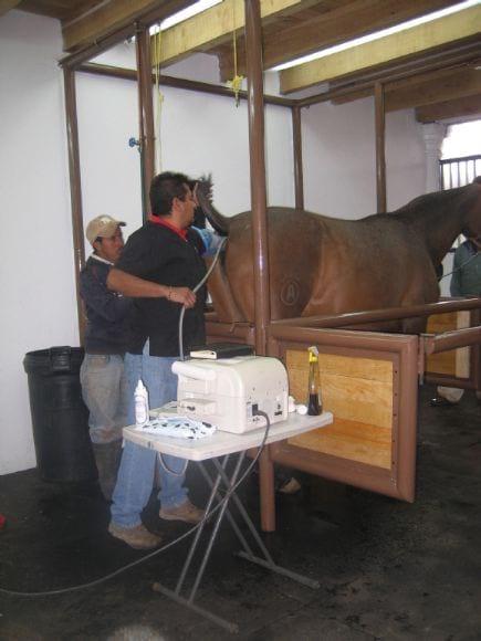 Monitoreo en inseminación artificial - equinos - Inseminación artificial en caballos