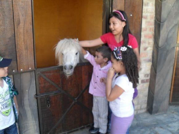 con el pony - lyanther