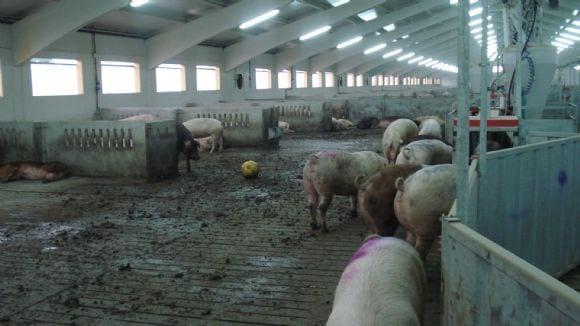 La obligación de poner juguetes en las granjas es subrealista - Otras