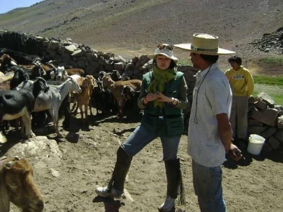 Inspección ganado caprino - Bovinos