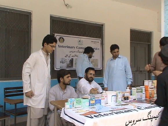 camp - Veterinary Camping Service at Bannu for Internally Displaced Persons of North Waziristan