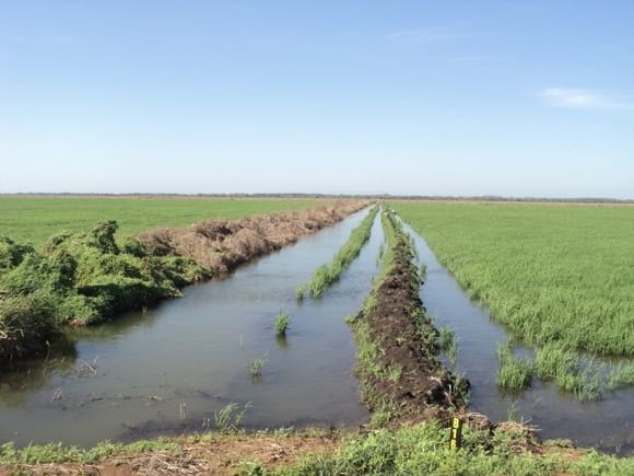 Proyecto arroz - Varias
