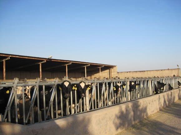 Amir Vakil-Gilani DAIRY FARM - Various