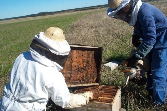 apicultura familiar - Varias