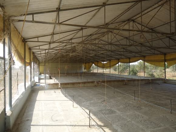 Deep Litter brooding Shed - EC Layer project India
