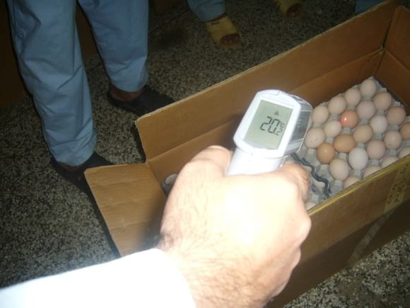 Hatching eggs temperature with Infra red thermometer in hatchery. - HATCHERY