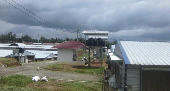 Sukamulya Broiler breeders farm - Sukamulya 1 Farm