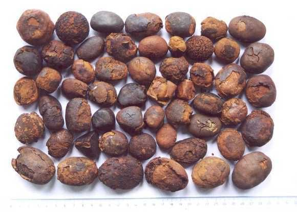 Cow Ox Gallstones - Various
