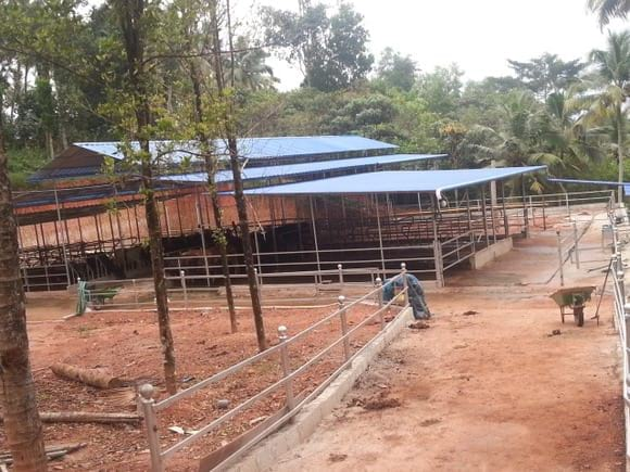 Freestall shed for 48 cows - Dairy housing for small scale dairying